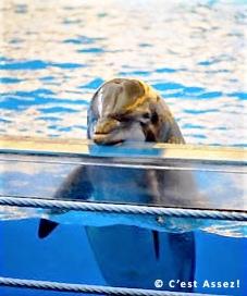 photo d'un Dauphin en captivité