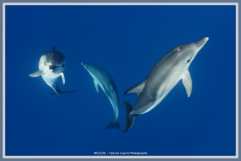 photo de dauphins qui jouent