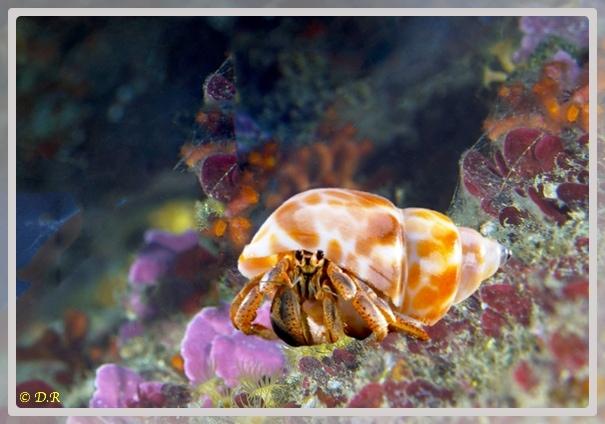 Photo d'un bernard l'hermite