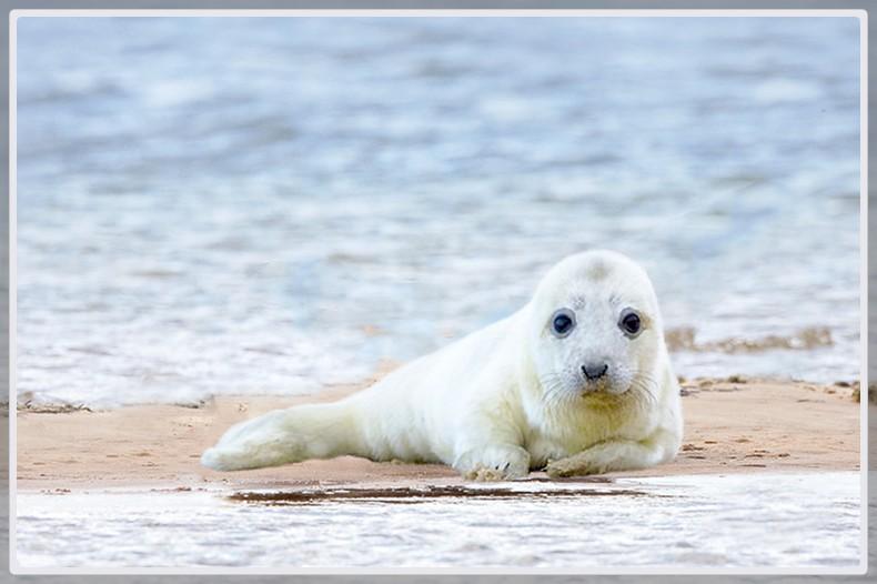 Photo d'un bébé phoque