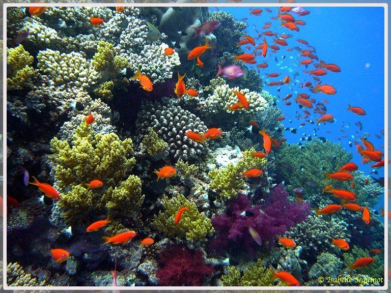 Photo d'un récif corallien avec petits poissons