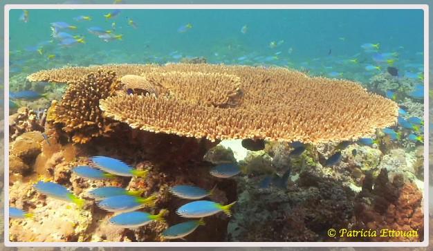 Photo d'un récif corallien