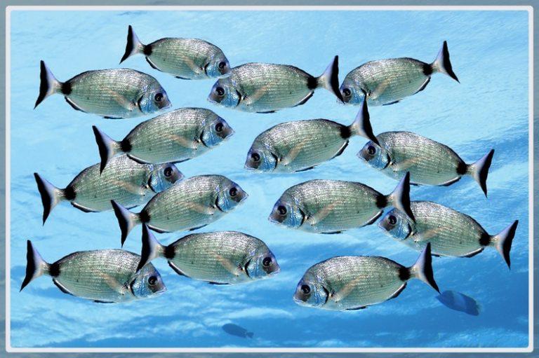 Photo d'un groupe de sars