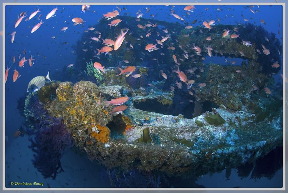 Photo de l'épave sous-marine Le Donator