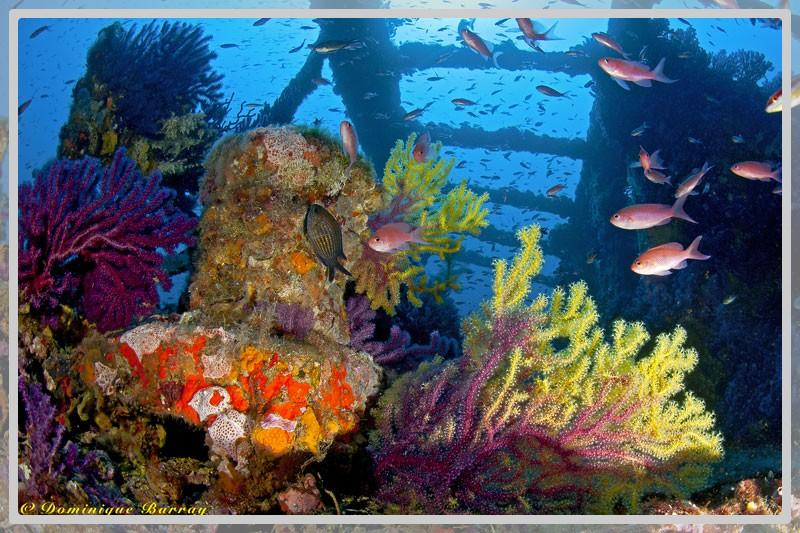 Photo de l'épave Le Grec avec la vie marine