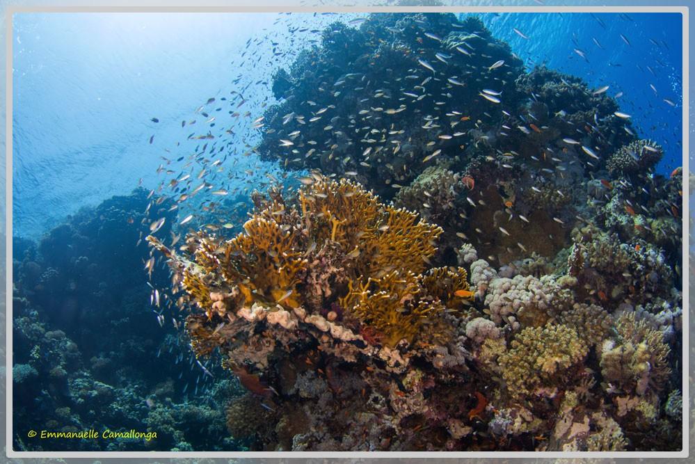 Photo d'un récif corallien à la Réunion plan large